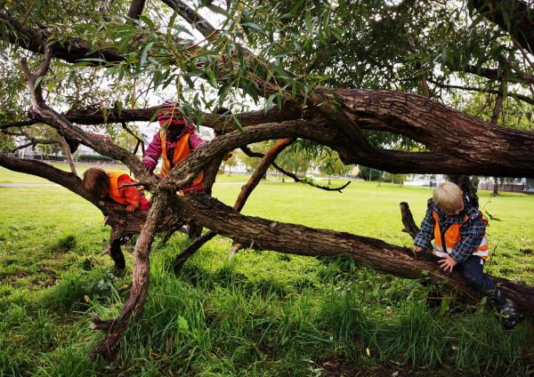 barn i treet